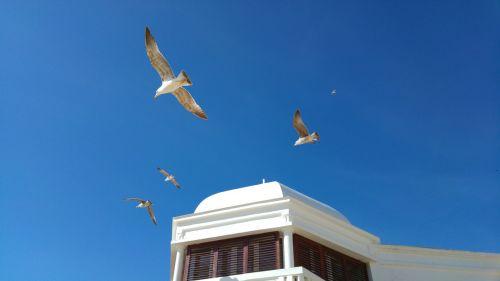 cadiz seagulls blue sky