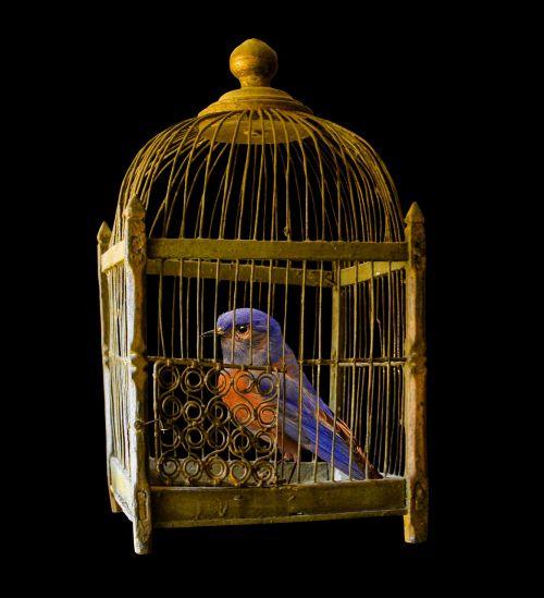 cage gold bird
