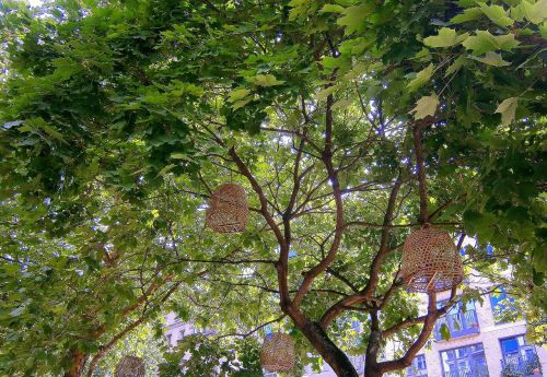 cage bird cage tree