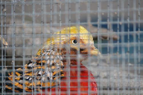 cage grid caught