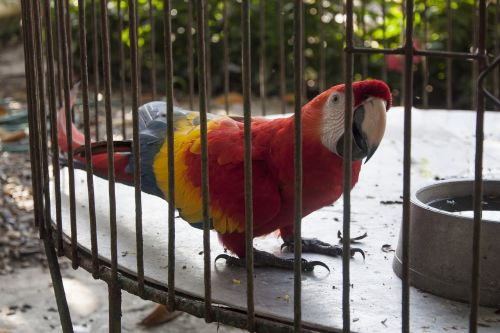 caged animal parrot