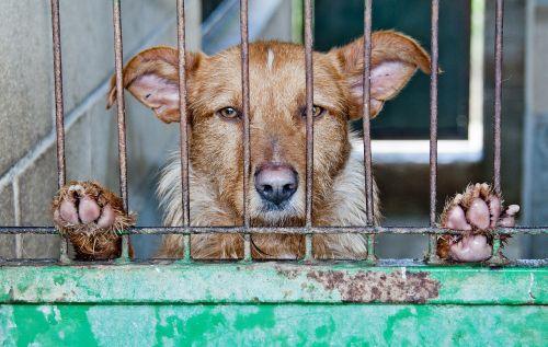 caged dog abandoned
