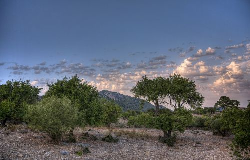 caimari,mallorca,nature,spain,summer,sky,balearic islands,landscape,sun,olive grove,clouds,mood,eng,travel,mediterranean,holiday,rest,olive trees