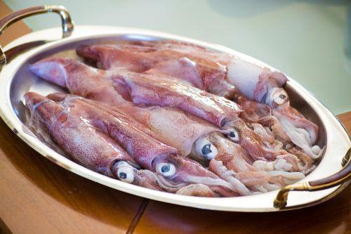 calamari sea food squid