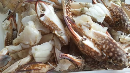 calamari sea food seafood