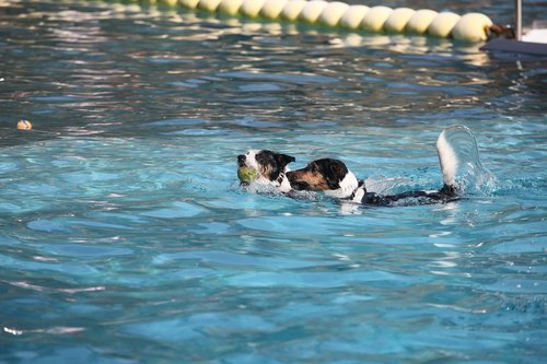 calden  forest swimming pool  dog swim