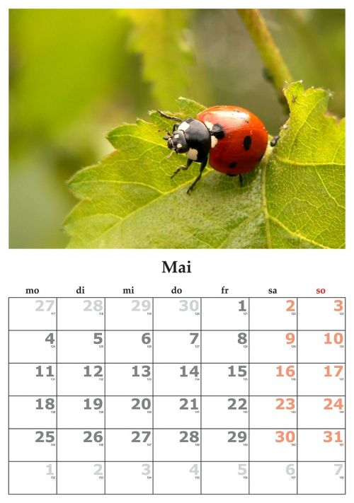 calendar month may