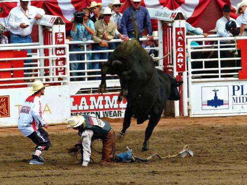 calgary stampede alberta