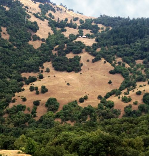 california mountains trees