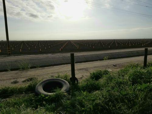 California Roadside