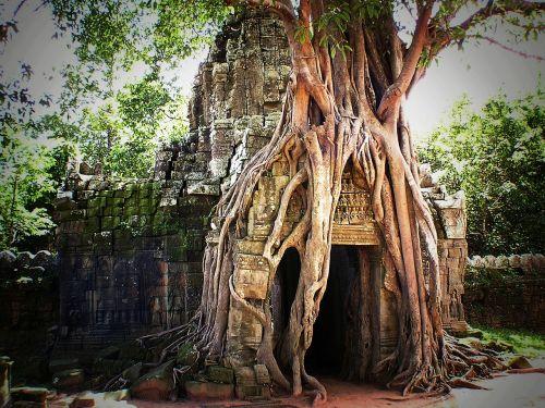 cambodia angkor asia