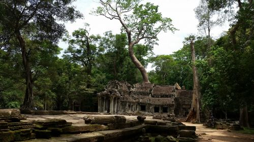 cambodia temple roots