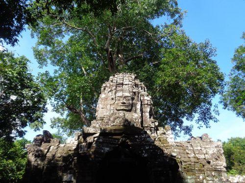 cambodia ruins trees
