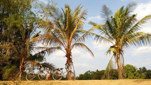 cambodia  island  palm trees