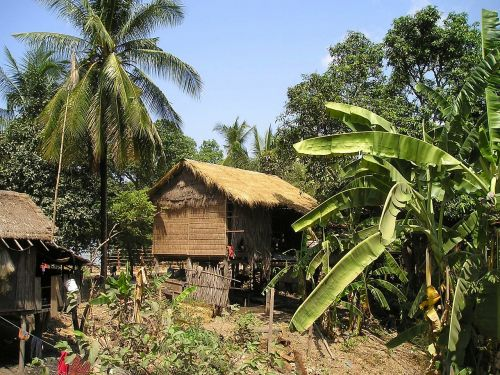 cambodia hut palm trees