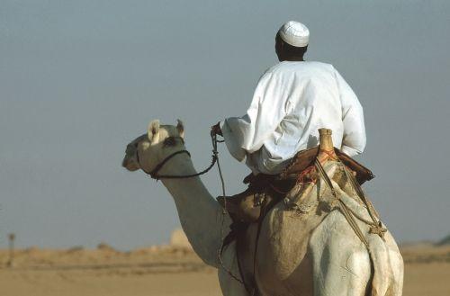 camel camel riders ride