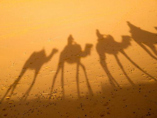 camel shadow desert