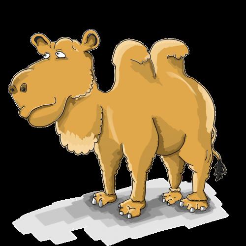 camel cartoon the mehari