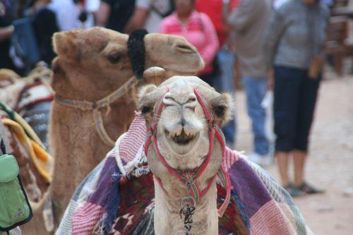 camel petra smile
