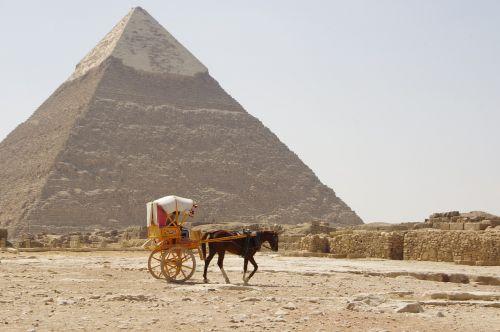 camel desert pyramid