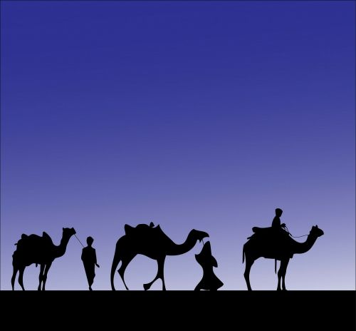 camel camels wise men