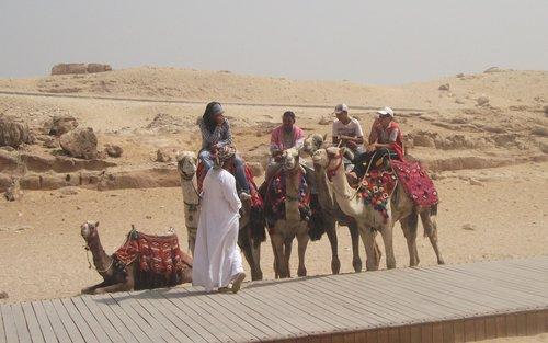 camel  desert  arab
