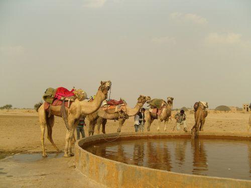 kupranugaris,Indija,kurie