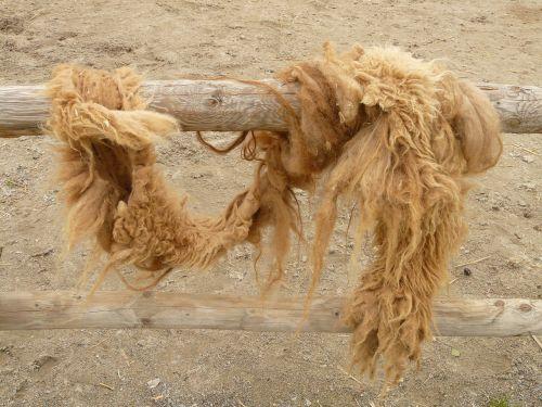 camel hair camel coat fur