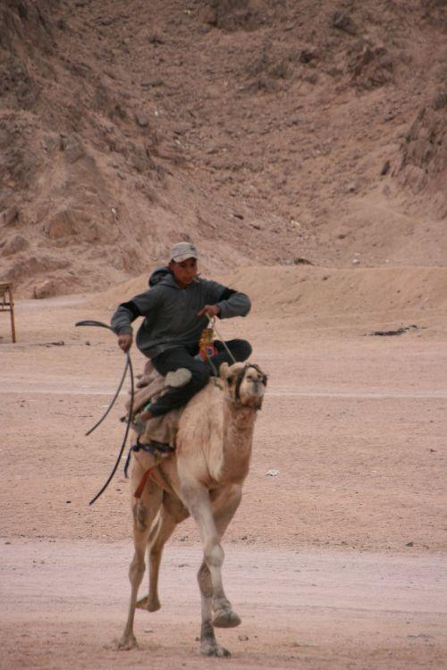 camel riding egypt sinai