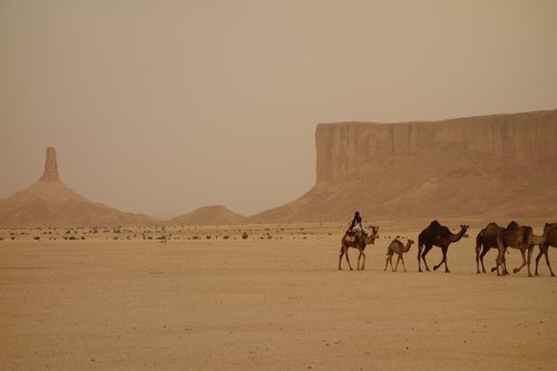 camel train  saudi arabia  ramadan