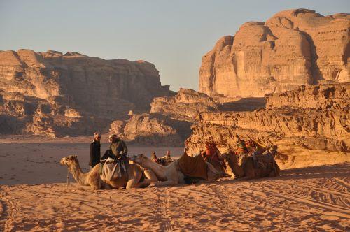 camels bedouins wadi rum