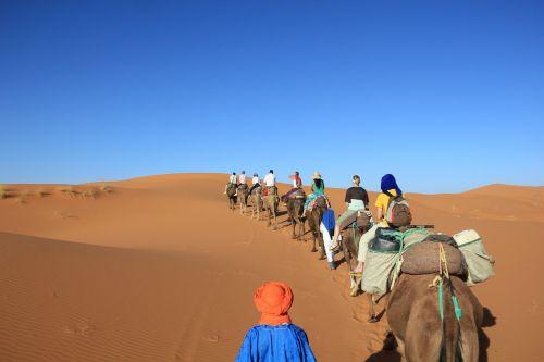 camels desert africa