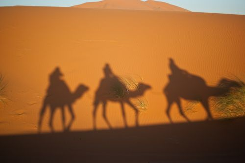 camels magi desert