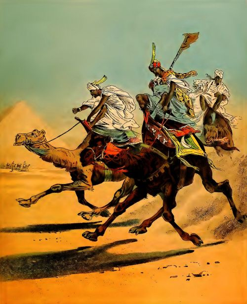 camels racing desert