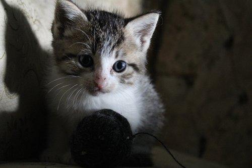 camera  cat  kittens
