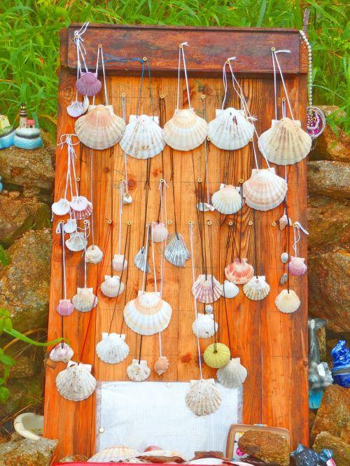 camino santiago vieira shells