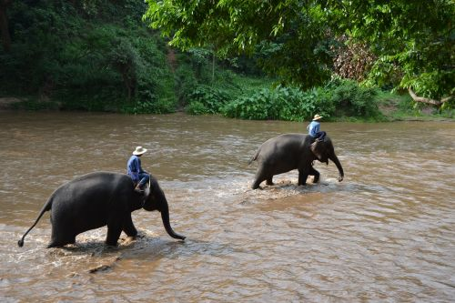 camp elephants elephant thailand