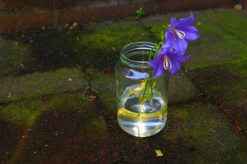 campanula vase water