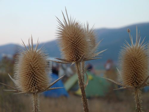camping tents gelendzhik
