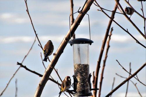 can  the feeder  feeding