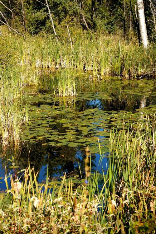 canada pond lake