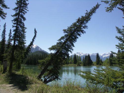 Kanada,banff,Nacionalinis parkas,gamta,miškai,Banfo nacionalinis parkas,Vakarų Kanadoje,Alberta,medis,eglė,askew,nukristi