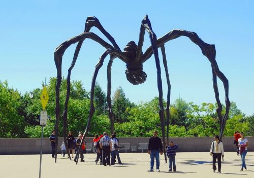 canada ottawa spider