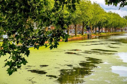 canal river froth