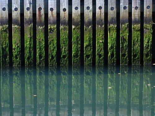canal algae dock