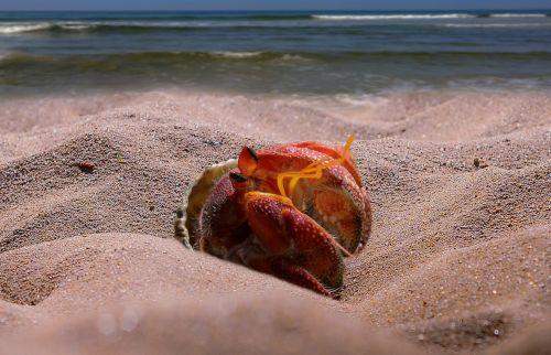 cancer sea beach