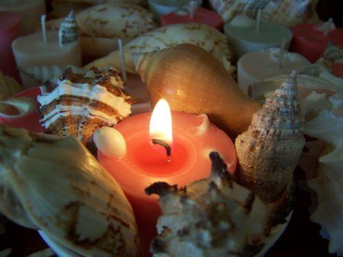 candle shells light