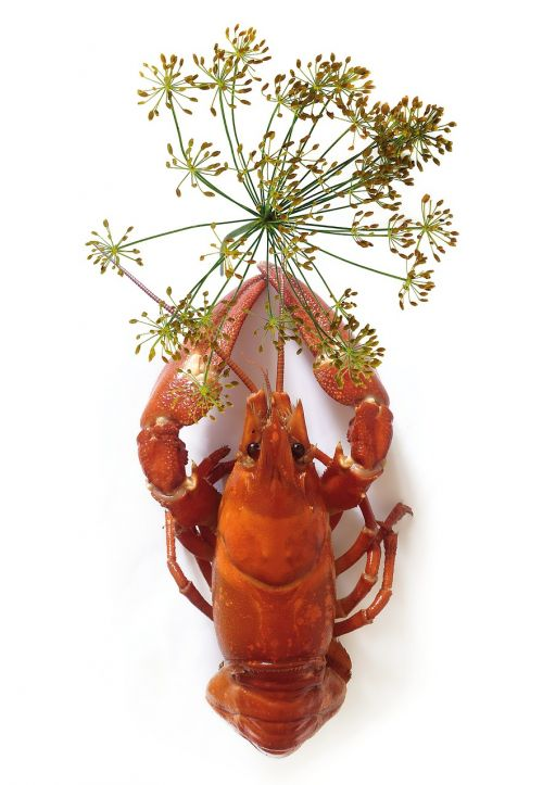 canker crown dill seafood