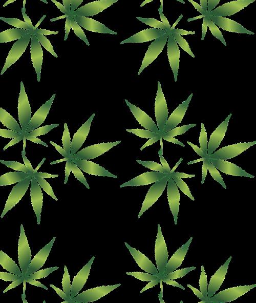 cannabis curative cut out