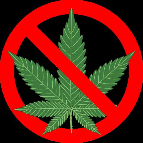 cannabis hemp leaf